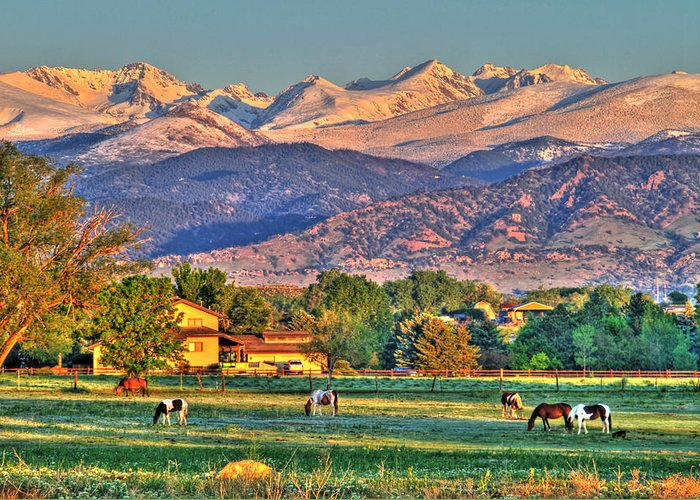 Colorado Greeting Card featuring the photograph Grazing by Scott Mahon