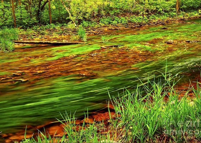 River Greeting Card featuring the photograph Green Forest River by Elena Elisseeva