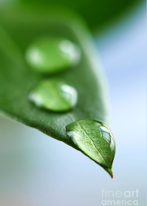 Leaf Greeting Card featuring the photograph Green Leaf With Water Drops by Elena Elisseeva