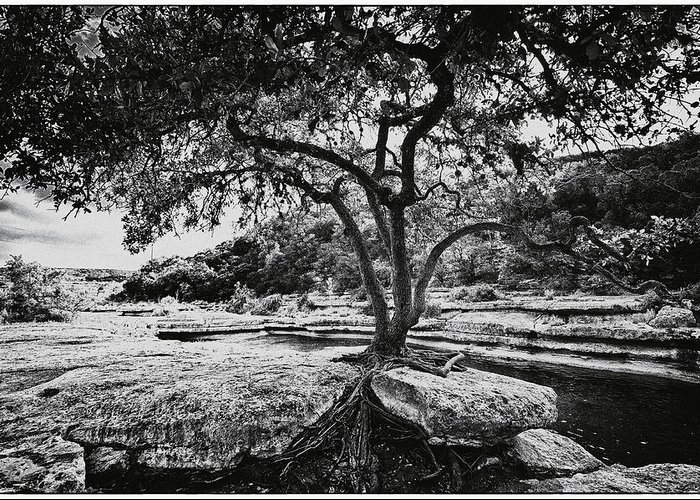 Still Life Greeting Card featuring the photograph Grown Into The Rock by Lisa Spencer