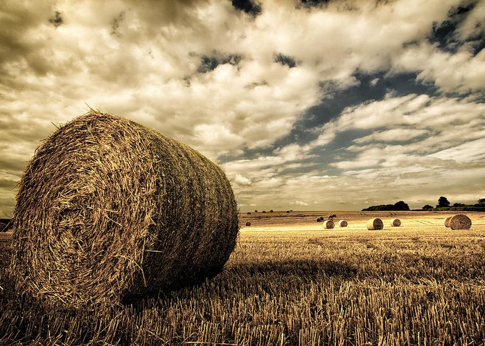 Harvest Time Greeting Card featuring the photograph Harvest Time by Rick Parrott
