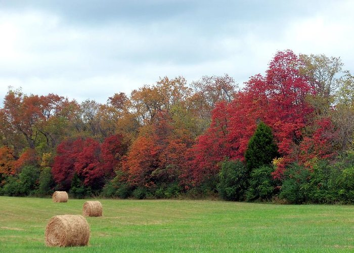 Hay October Greeting Card featuring the photograph Hay October by Kay Sawyer