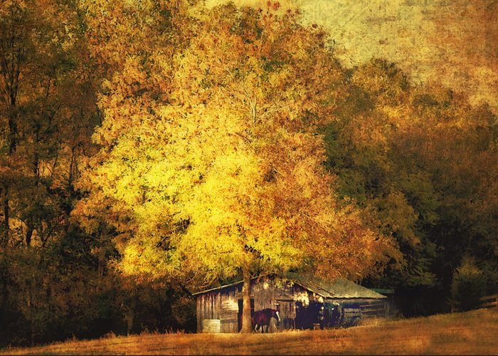 Barn Greeting Card featuring the photograph Horse Barn In The Shade by Kathy Jennings