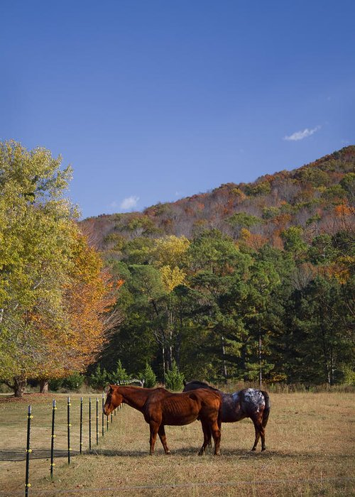 Horse Greeting Card featuring the photograph Horses And Autumn Landscape by Kathy Clark