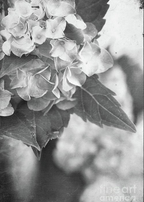 Hydrangea Greeting Card featuring the photograph Hydrangeas In Black And White by Stephanie Frey
