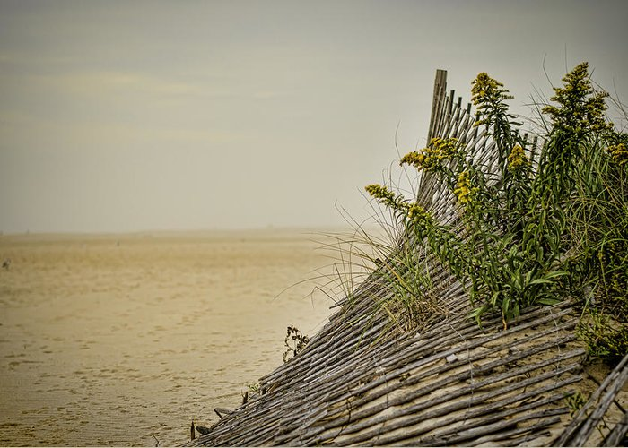 Beach Greeting Card featuring the photograph Jersey Shore by Heather Applegate