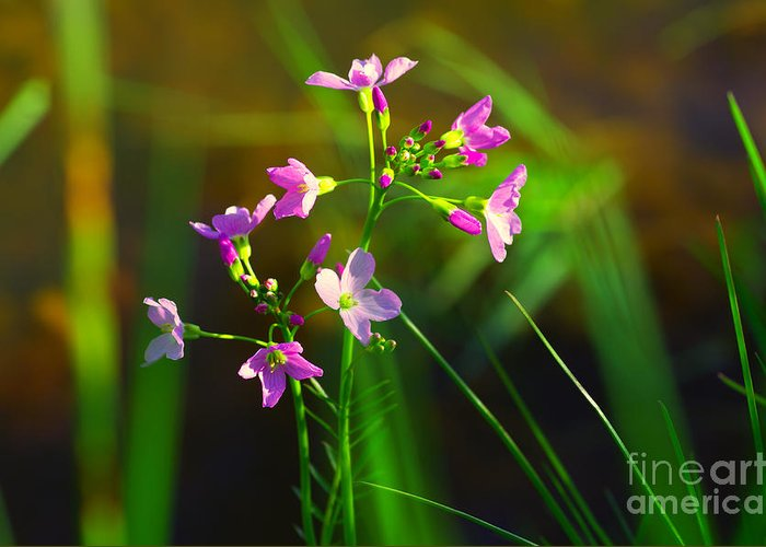 Natur Greeting Card featuring the photograph Kuckucksblume by Tanja Riedel