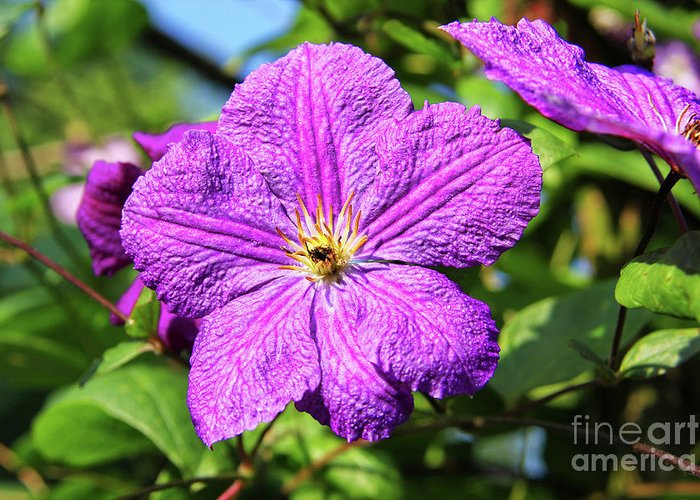 Last Summer Bloom Greeting Card featuring the photograph Last Summer Bloom by Mariola Bitner