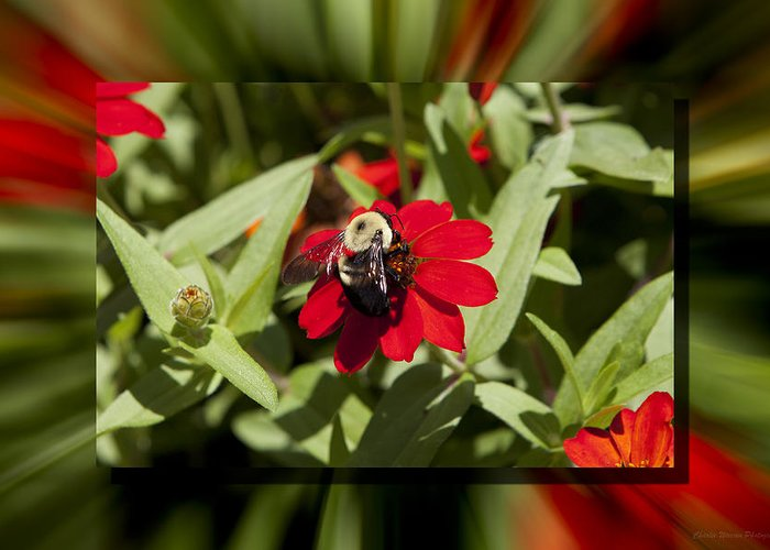 Flower Greeting Card featuring the photograph Let It Bee by Charles Warren
