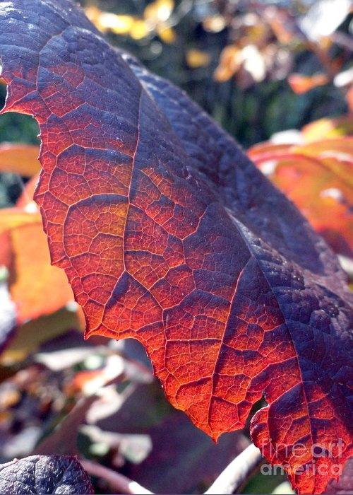 Leaves Greeting Card featuring the photograph Light Of The Lifeblood by Trish Hale