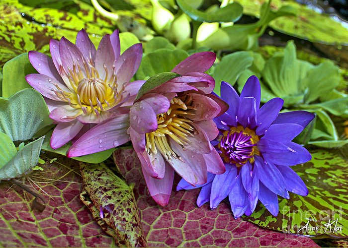 Blue Purple Violet Magenta Pink Flowers Water Lily Lilies Greeting Card featuring the photograph Lilies No. 29 by Anne Klar