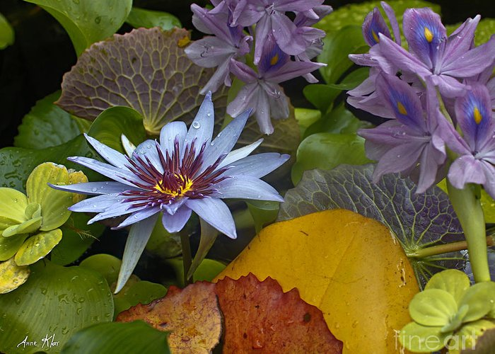 Blue Lilies Greeting Card featuring the photograph Lilies No. 37 by Anne Klar