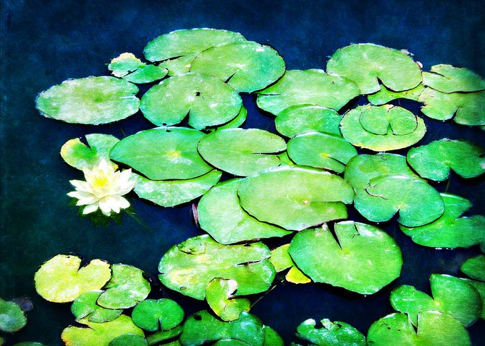 Lilly Pad Greeting Card featuring the photograph Lily Pads And Lotus by Tammy Wetzel