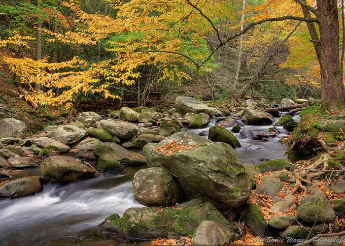 Great Smoky Mountains Greeting Card featuring the photograph Little River I by Charles Warren