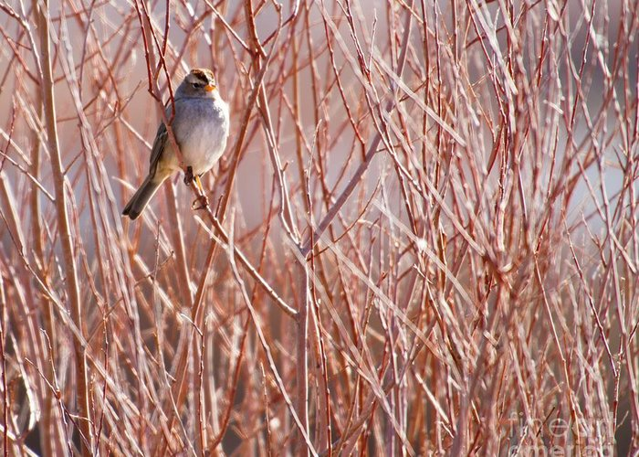 Bird Greeting Card featuring the photograph Little Sparrow by Sabrina L Ryan