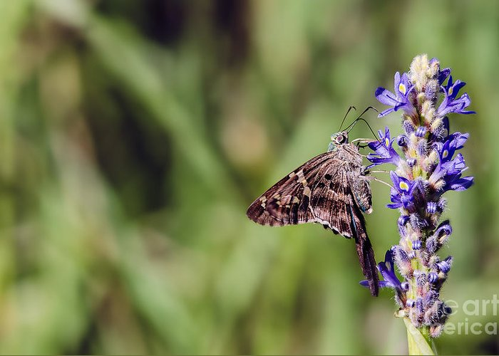 Cindy J Bryant Greeting Card featuring the photograph Long-tailed Skipper Butterfly by Cindy Bryant