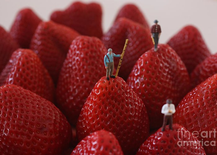 Strawberry Greeting Card featuring the photograph Looking For A Strawberry Hill Thrill by David Bearden