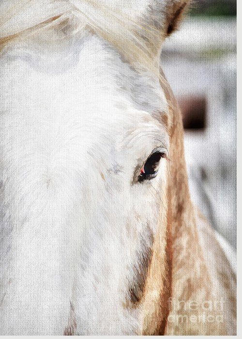 Animal Greeting Card featuring the photograph Looking Into Her Soul by Darren Fisher