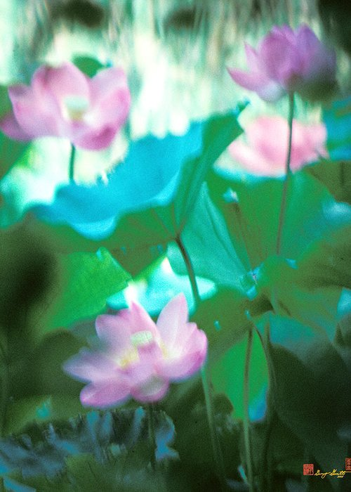 Nature Greeting Card featuring the photograph Lotus--ethereal Impressions II 20a1 by Gerry Gantt