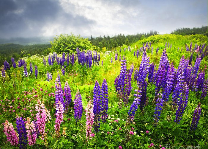 Flowers Greeting Card featuring the photograph Lupin Flowers In Newfoundland by Elena Elisseeva
