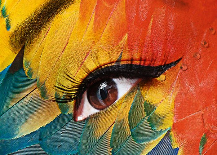 Human Eye Greeting Card featuring the photograph Macaw by Yosi Cupano