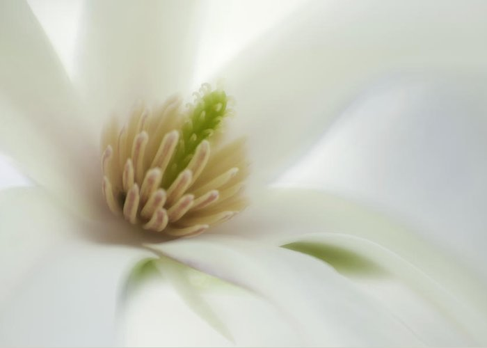 Flower Greeting Card featuring the photograph Magnolia by Silke Magino