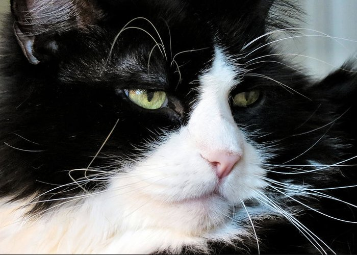Cat Greeting Card featuring the photograph Maine Coon Face by Michelle Milano