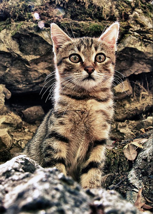 Alone Greeting Card featuring the photograph Mediterranean Wild Babe Cat by Stelios Kleanthous