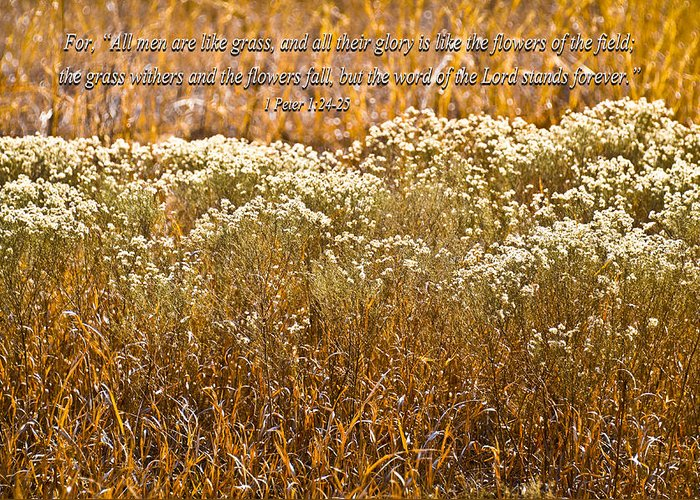 Golden Field Greeting Card featuring the photograph Men Are Like Grass by Carolyn Marshall