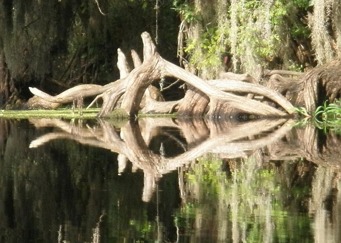 Florida Greeting Card featuring the photograph Mirrorknot by Warren Clark
