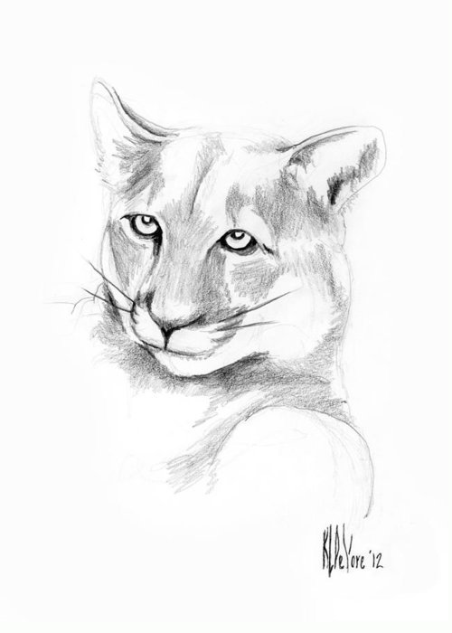 Mountain Lion Greeting Card featuring the drawing Missouri Mountain Lion by Kip DeVore