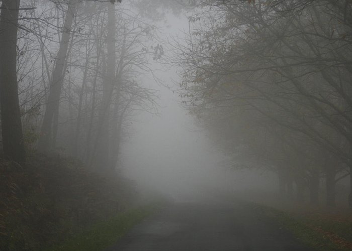 Tree Greeting Card featuring the photograph Mist Fog And The Road by Georgia Fowler