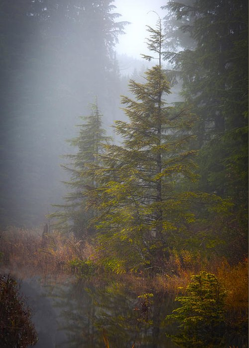 Fall Greeting Card featuring the photograph Morning Fall Colors by Mike Reid