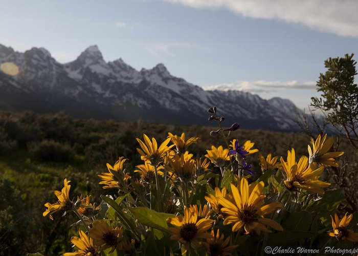 Flowers Greeting Card featuring the photograph Mountain Flowers by Charles Warren