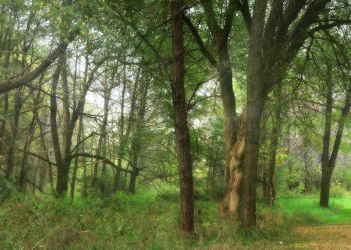 Hovind Greeting Card featuring the photograph Mystic Forest by Scott Hovind