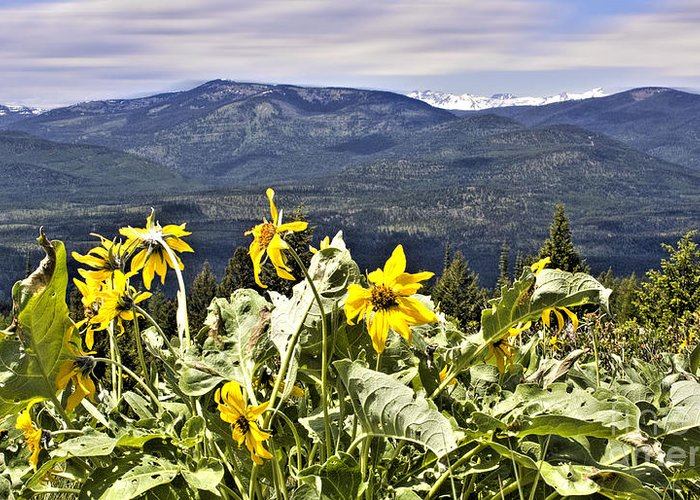 Montana Landscapes Photographs Greeting Card featuring the photograph Nature Dance by Janie Johnson