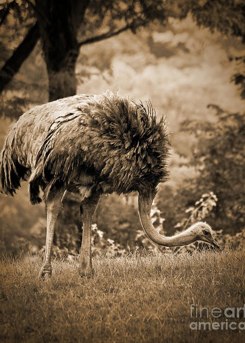 African Greeting Card featuring the photograph Ostrich by Arne Hansen