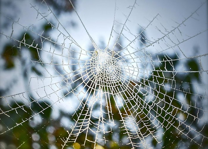 Spider Web Greeting Card featuring the photograph Pablo's Web by Gwyn Newcombe