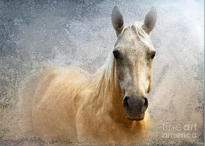 American Quarter Horse Greeting Card featuring the photograph Palomino by Betty LaRue