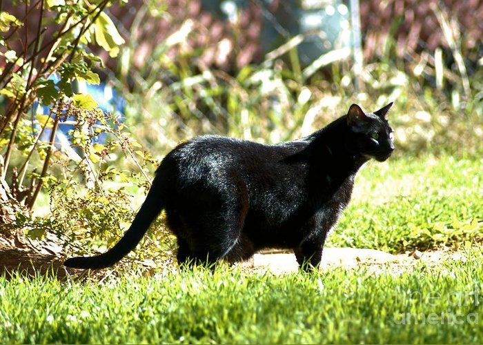 Cat Greeting Card featuring the photograph Panther In The Backyard by Cheryl Poland