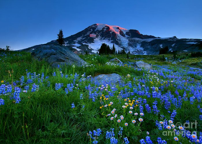 Majestic Greeting Card featuring the photograph Paradise Garden Dawning by Mike Dawson