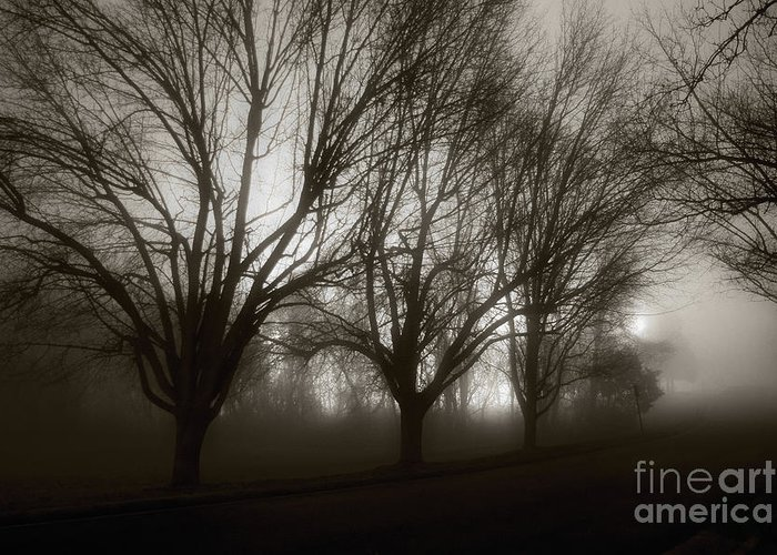 Night Greeting Card featuring the photograph Park In Fog by Susan Isakson