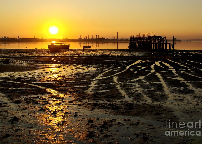 Algae Greeting Card featuring the photograph Pier At Sunset by Carlos Caetano