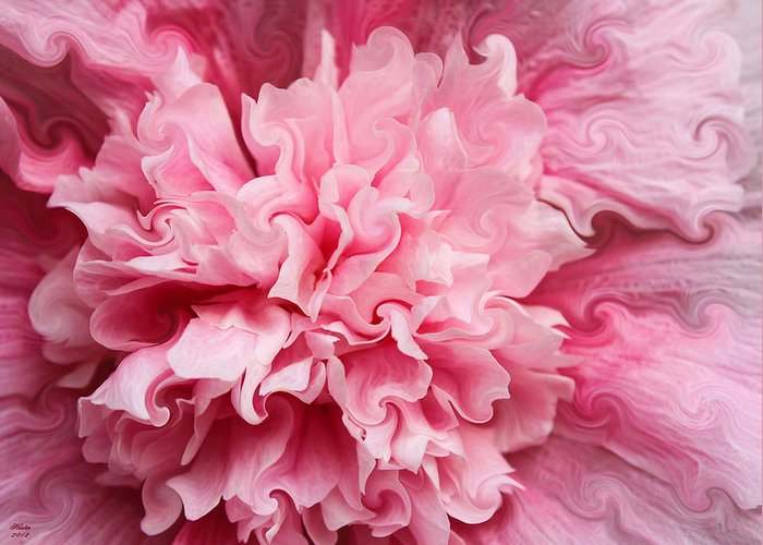Hollyhock Greeting Card featuring the photograph Pink by Kristin Elmquist