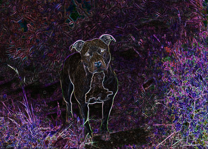 Pitbull Greeting Card featuring the photograph Pitty In Purple by Travis Crockart