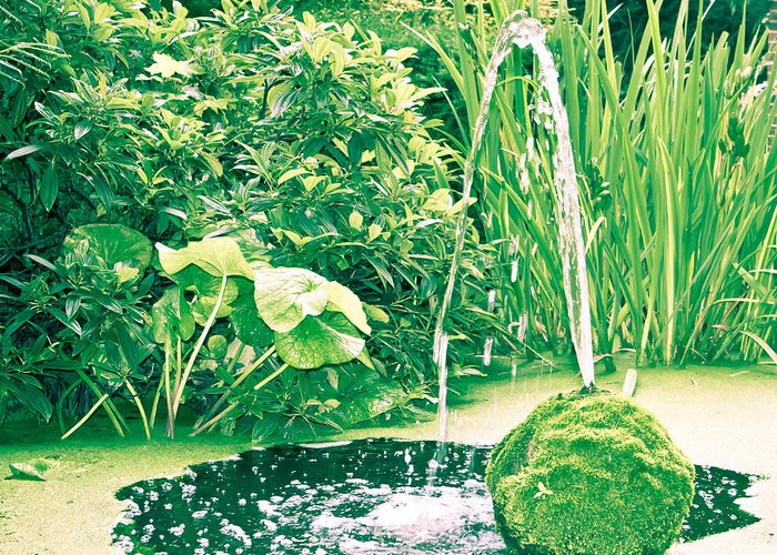 Abundnace Greeting Card featuring the photograph Pond by Tom Gowanlock