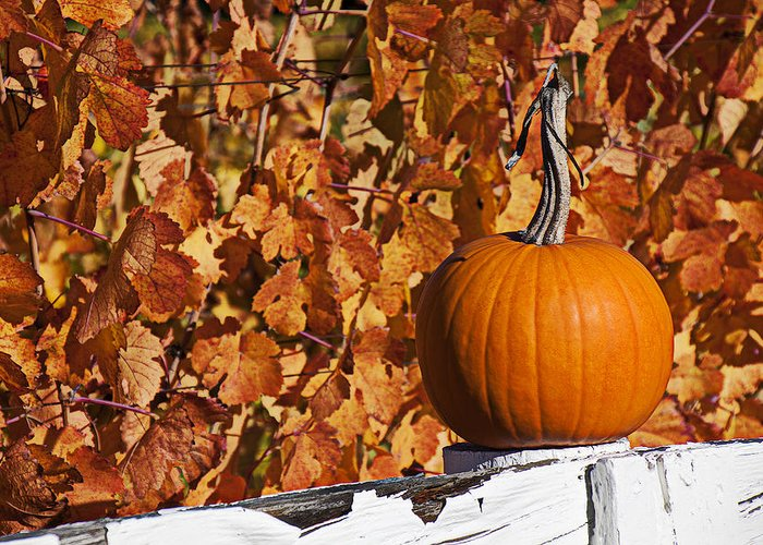 Fence Greeting Card featuring the photograph Pumpkin On White Fence Post by Garry Gay