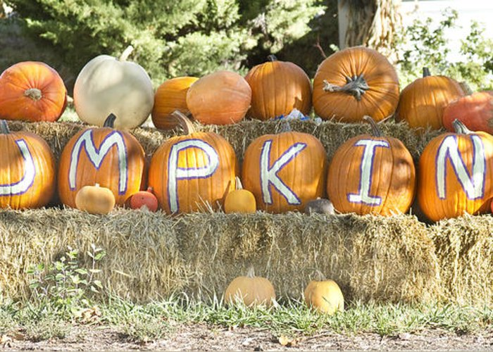 Pumpkins Greeting Card featuring the photograph Pumpkins P U M P K I N S by James BO Insogna