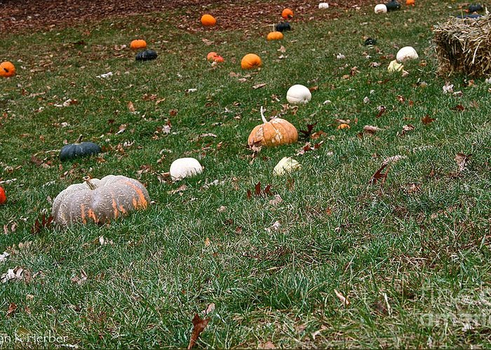 Outdoors Greeting Card featuring the photograph Pumpkins by Susan Herber