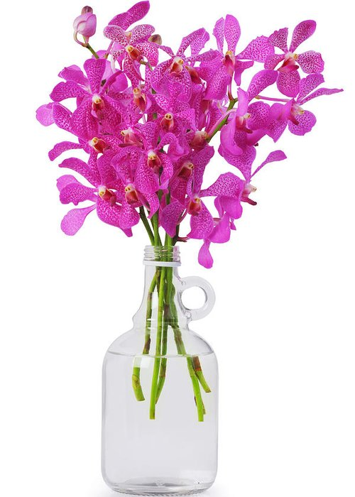 Asian Greeting Card featuring the photograph Purple Orchid In Bottle by Atiketta Sangasaeng